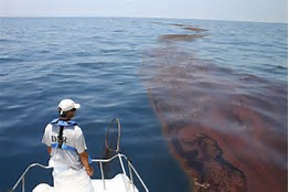 Sea Grant Publications on the Impacts of the BP Oil Spill