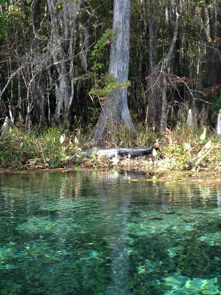 Our Panhandle Springs Provide a Magical Experience