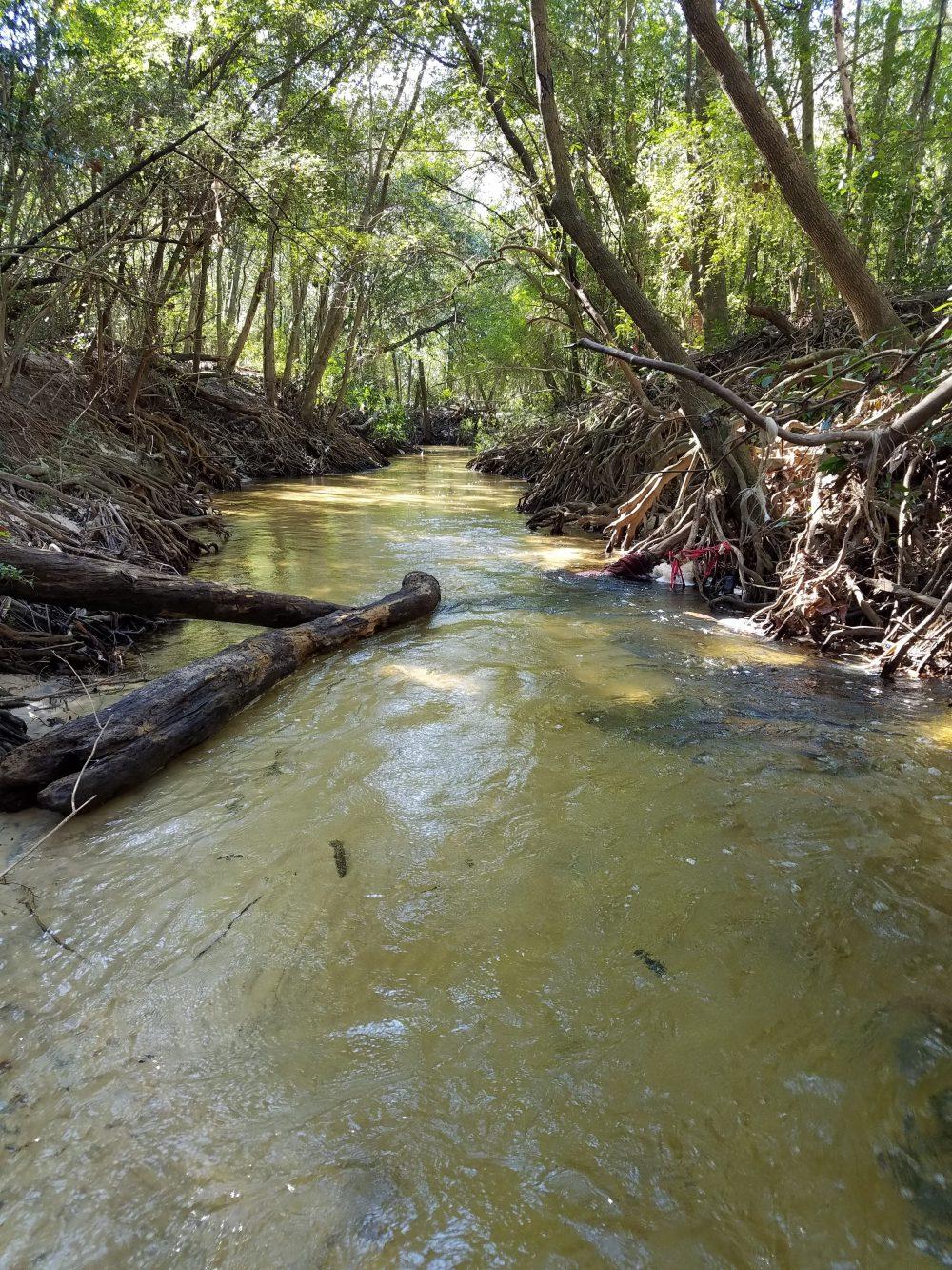 Summer Rain in the Florida Panhandle