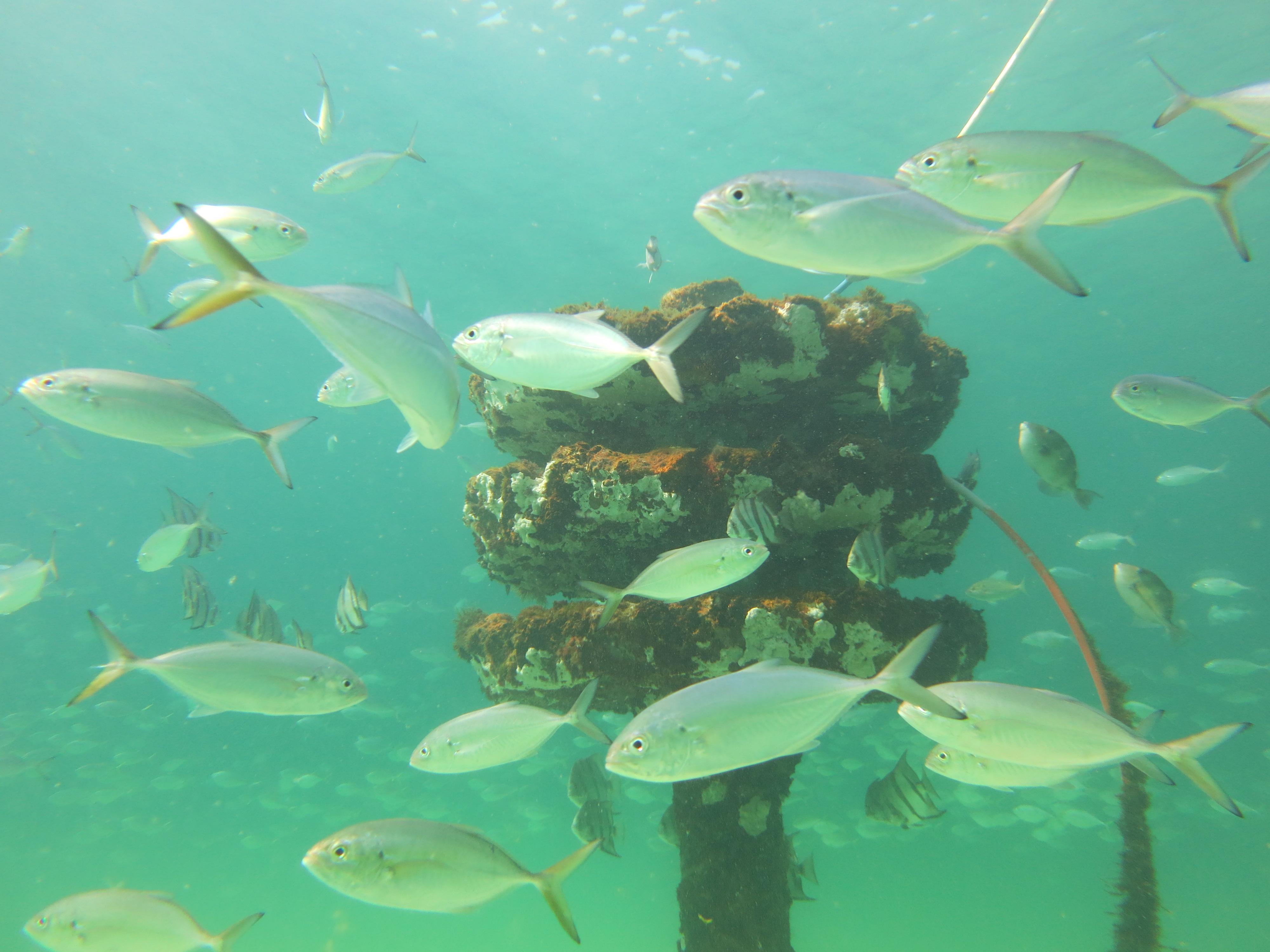 Snorkel The Gulf Navarre Beach Marine Sanctuary
