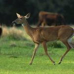 Steps for Dealing with Nuisance Wildlife