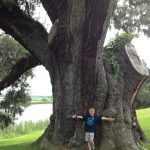 Arbor Day–a celebration of the trees in our lives