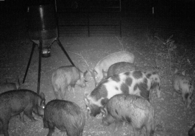 NISAW 2018:  Successful Feral Hog Management