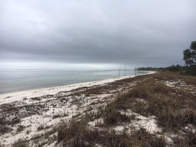 Restoring the Health of Pensacola Bay, What Can You Do to Help?  – Bioaccumulation of Toxins