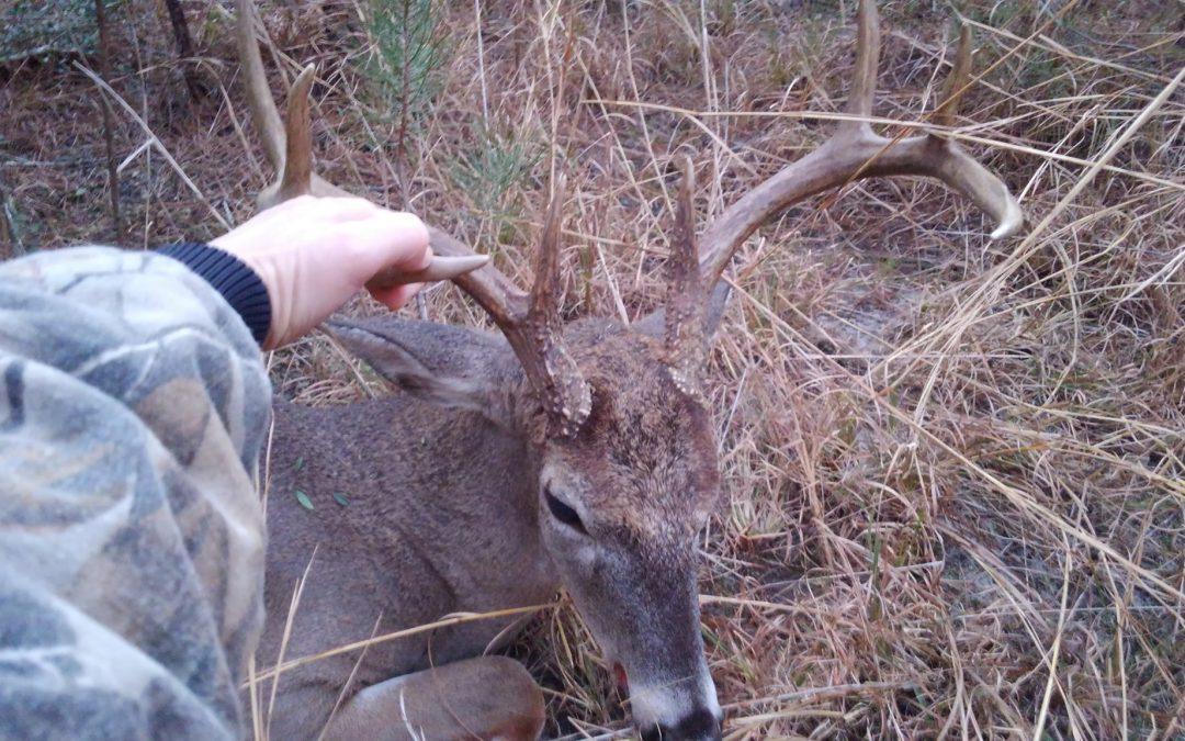 Deer Rut in Northwest Florida