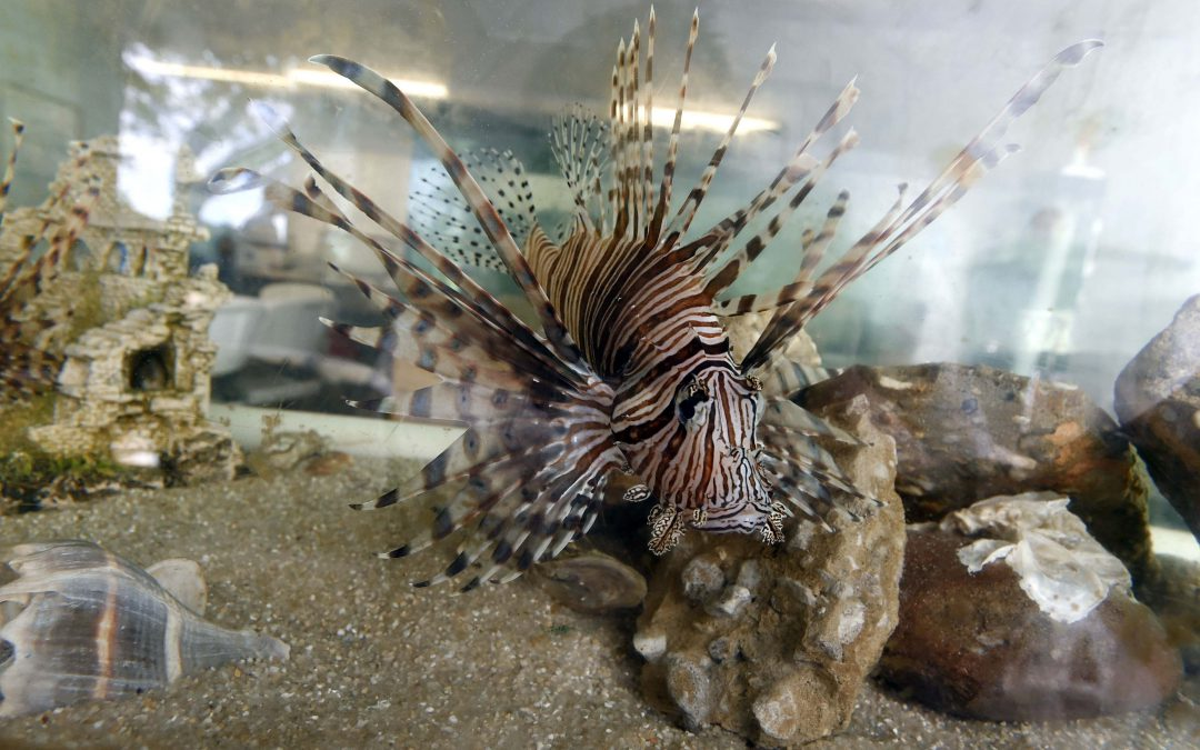 The 2019 Emerald Coast Open: The Largest Lionfish Tournament in History