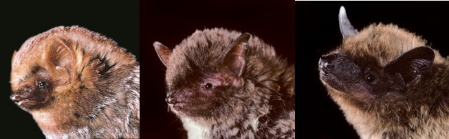 Bats: Friends of Farmers and Gardeners