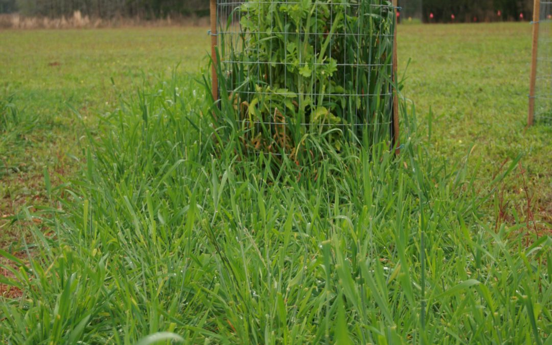 3 Steps to Successful Food Plots