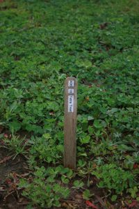 Tetra Treat Clover Mixture Plot