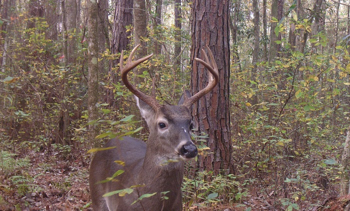 Deer Harvest Reporting System in Effect this Season