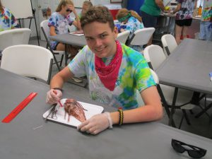 A 4-H youth at Camp Timpoochee Marine Camp dissecting a lionfish.