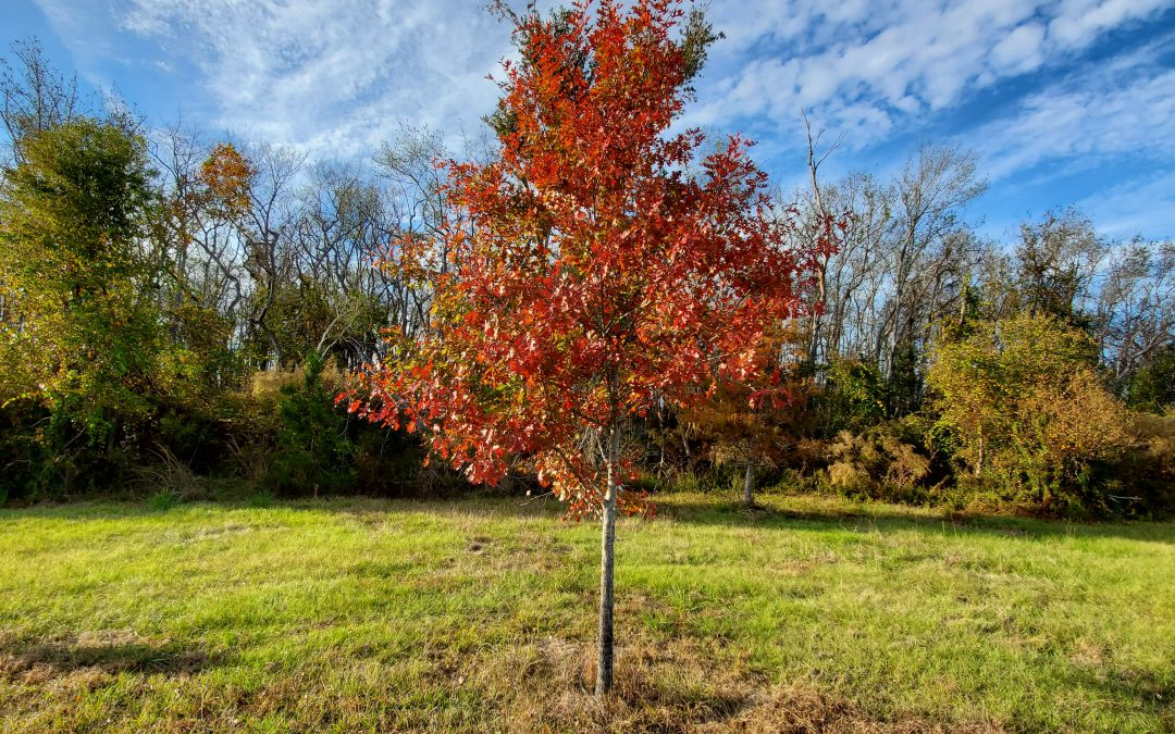 Enhancing Your Winter Wildlife Plots with Hard Mast Trees