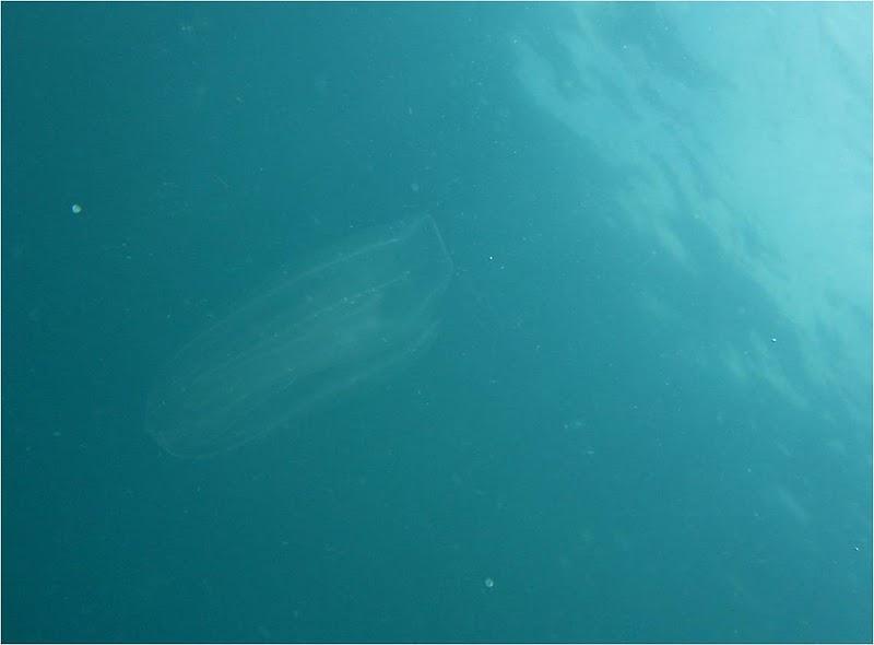 Embrace the Gulf 2020 – the jellyfish