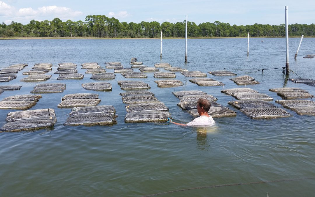 CFAP 2 Will Cover an Additional 40 Commodities; Including Farmed Molluscan Shellfish