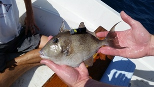 Reef Fish of the Florida Panhandle