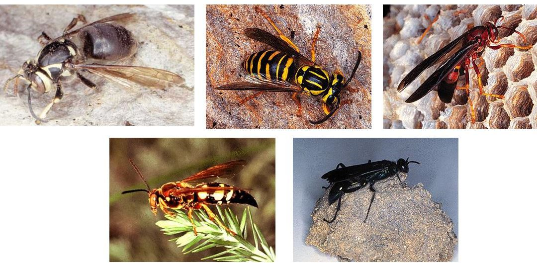 Wait, Wasps are Good Guys?