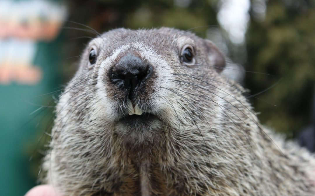 Groundhog or Gopher?