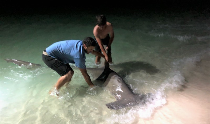 Team True Blue Provides Shark Data to increase NOAA Research on the Navarre Beach Fishing Pier