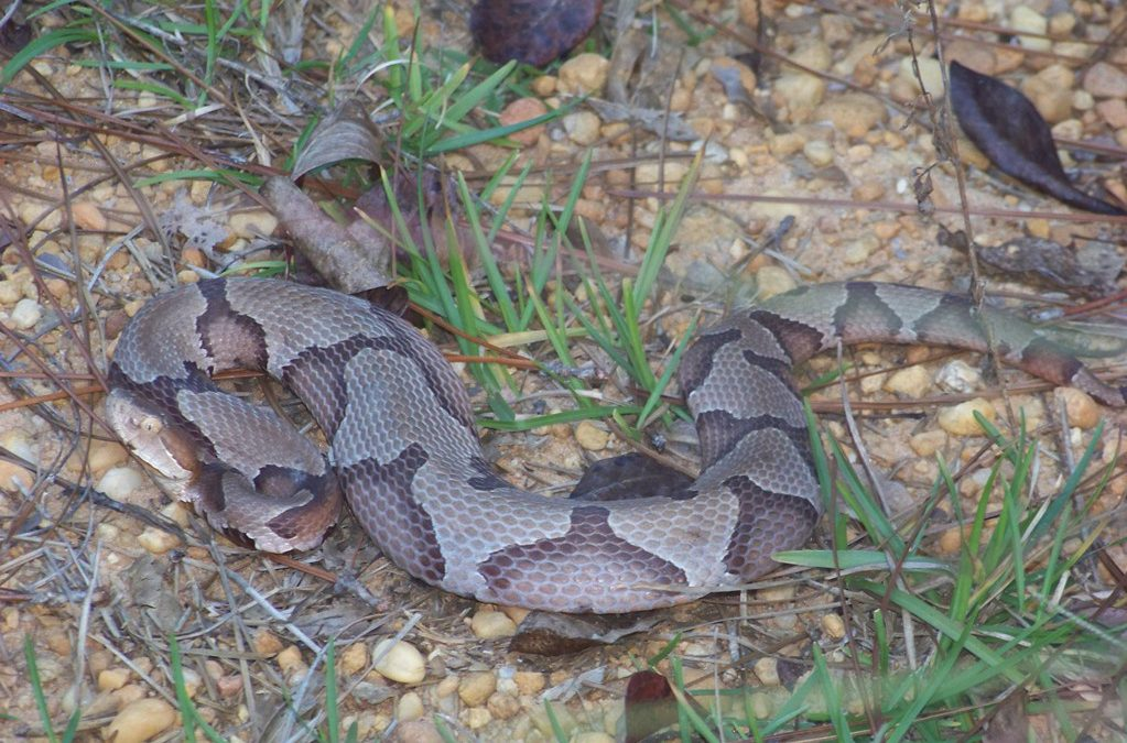 Snakes of the Florida Panhandle
