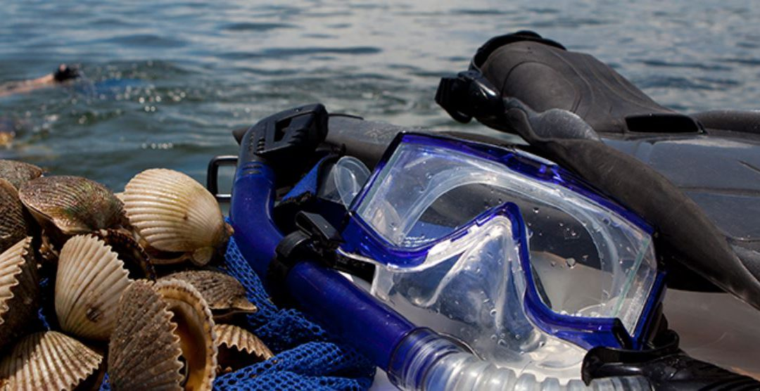 Scalloping, Be Safe and Protect Wildlife: Tips from UF/IFAS and Florida Sea Grant Experts