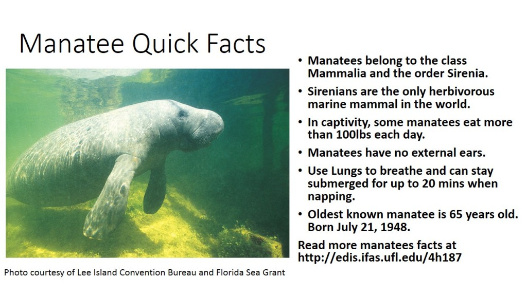 Manatee Quick Facts