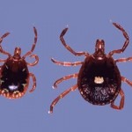 Prevent Tick-borne Illnesses in Florida