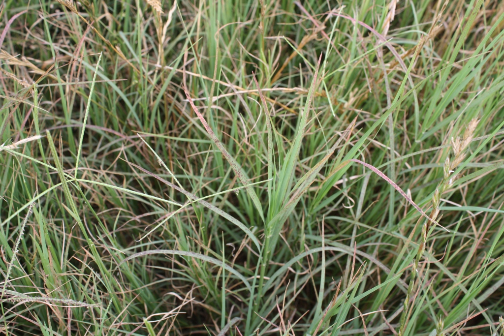bermudagrass hay whichever type of hay you go pets world