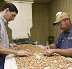 When It's All Said and Done – Lessons Learned from the 2016 Peanut Season
