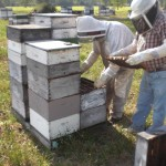 Summer Hive Management for Panhandle Beekeepers