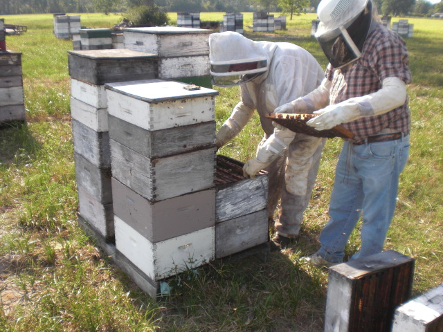 Hive maintenance must be top priority for beekeepers during the summer months.