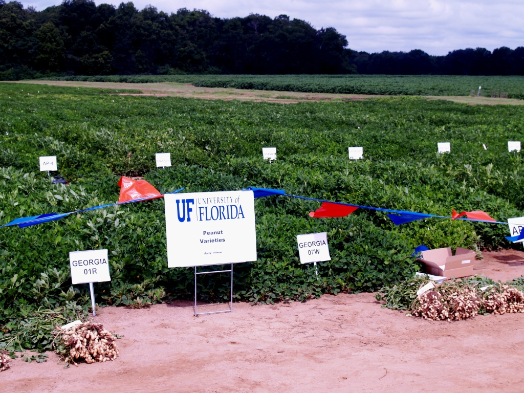 peanut thesis articles weed management Crop, forage and turfgrass management abstract - crop management weed control in soybean with preemergence- and postemergence-applied herbicides.