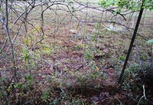 Unmanaged fence rows can hide an assortment of problems
