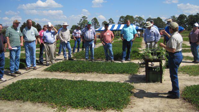 Perennial Peanut Field Day – May 31