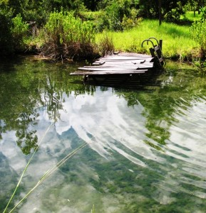 "Warm temperatures and longer days have kicked pond productivity into ""high gear."""