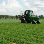 Peanut Fungicide Application 6-21-13
