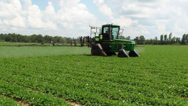 Peanut Fungicide Application 6-21-13