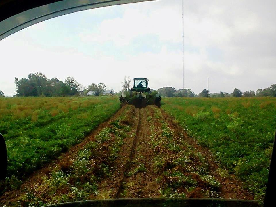 Photo courtesy of Ken Barton, Florida Peanut Producers Association