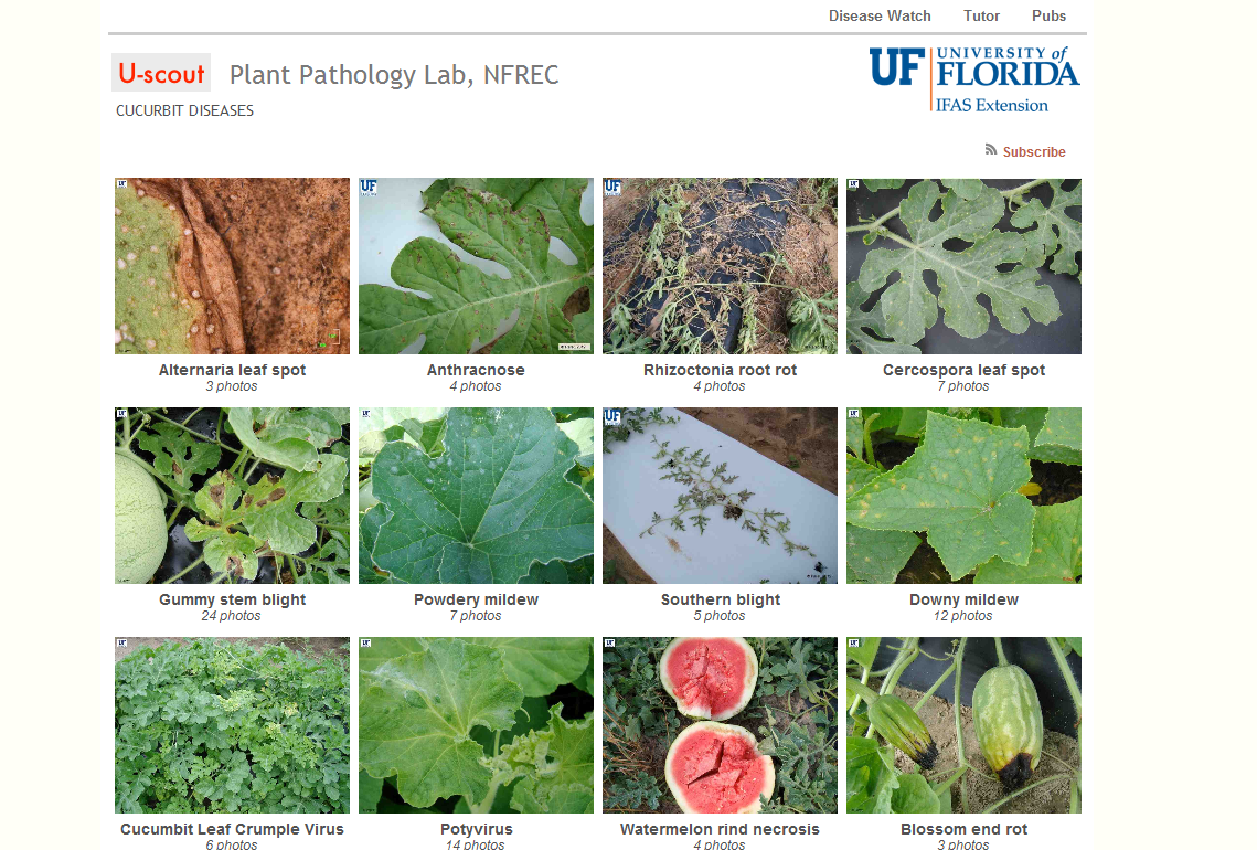 U-scout: An Excellent Resource for Vegetable Disease Diagnosis ...