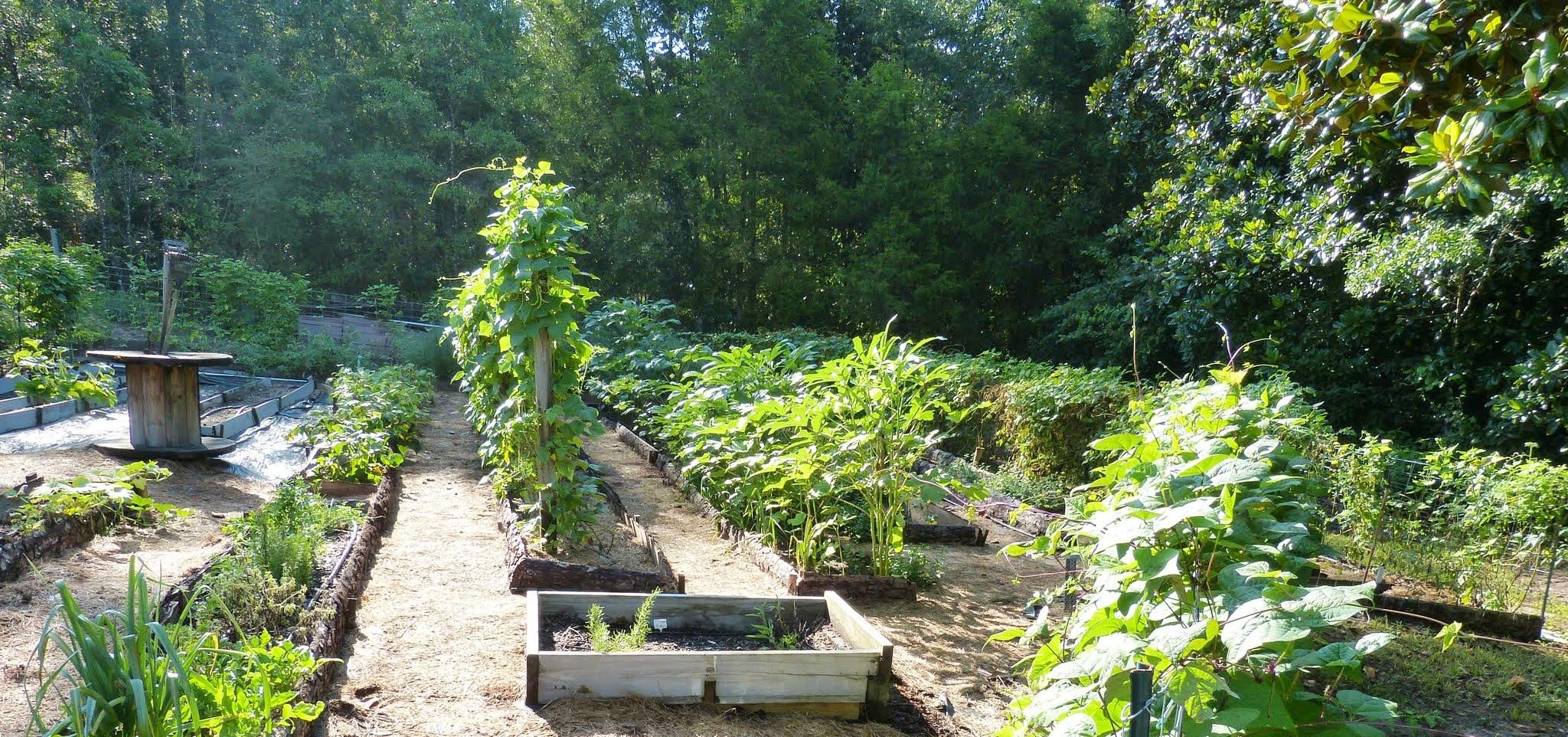 Is My Small Farm Organic?