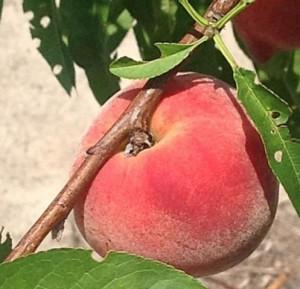 UFGlo Peach