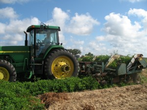 """""""Turning peanuts"""" from the soil is which they grow is just one part of a peanut farmers season long profession of growing, harvesting, and marketing this abundant agricultural product."""