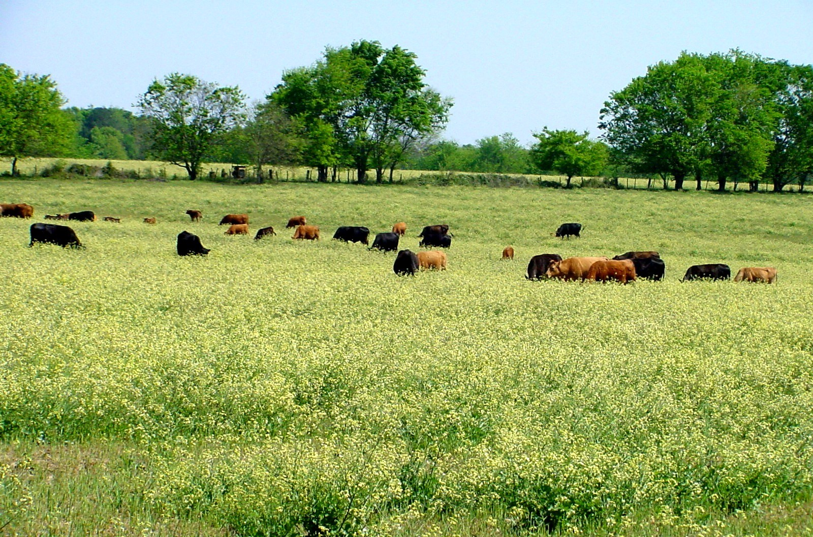 Preparing for Winter Weeds in Pastures