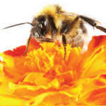 Introduction to Beekeeping Shortcourse February 28