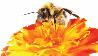 Apalachee Beekeeper graphic