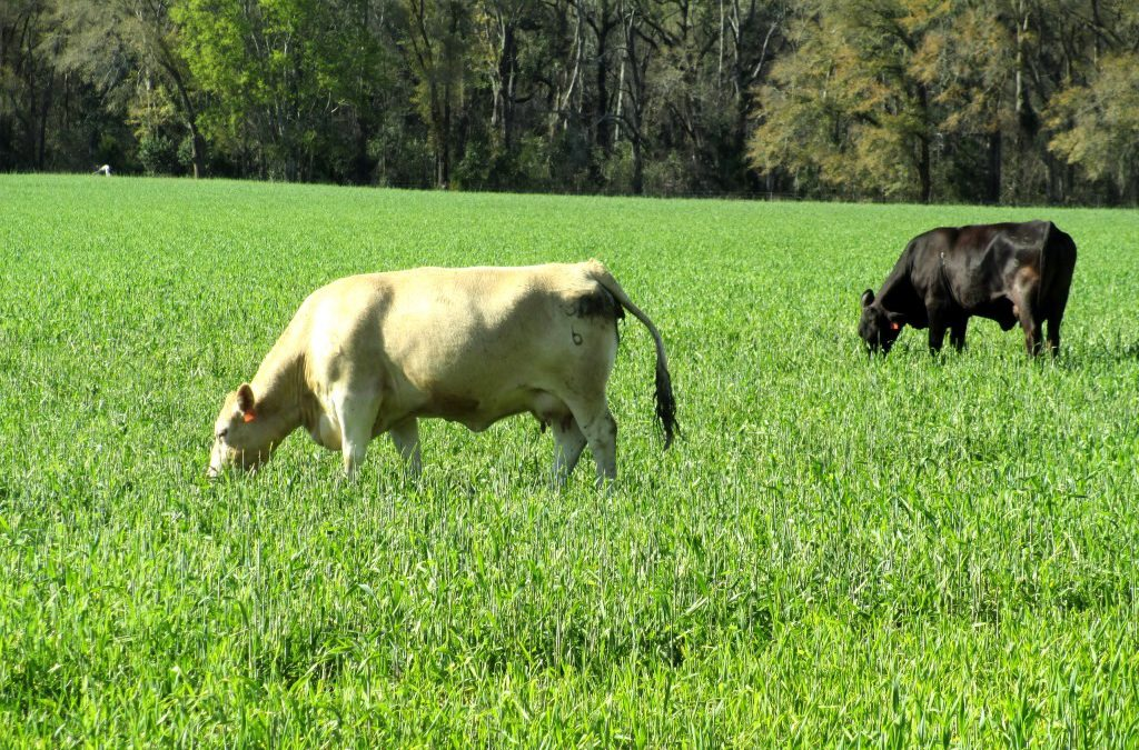 2019 Cool-Season Forage Variety Recommendations for Florida