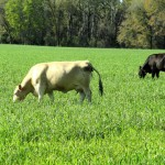 February Cattle & Forage Management Reminders