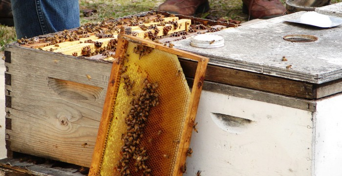 beehives2