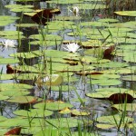 Excess aquatic vegetation can be a source of frustration for pond owners.