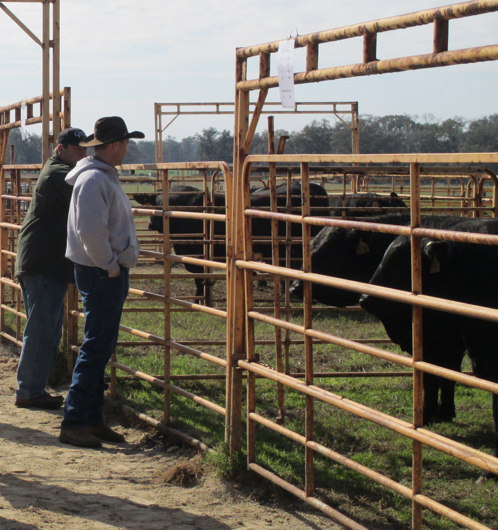 Using Performance Data to Improve Bull Selection – January 9