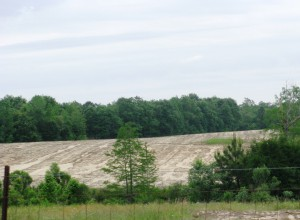 Sheet erosion in Holmes County field.  Courtesy of Shep Eubanks